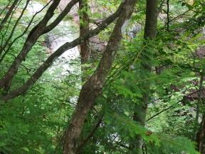 田立の滝 洗心滝
