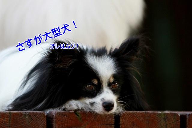 2IMG_1505.jpg