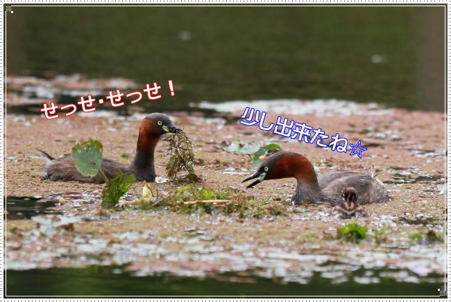 2IMG_2238.jpg