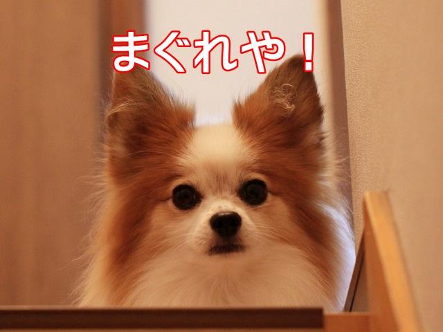 2IMG_7127.jpg