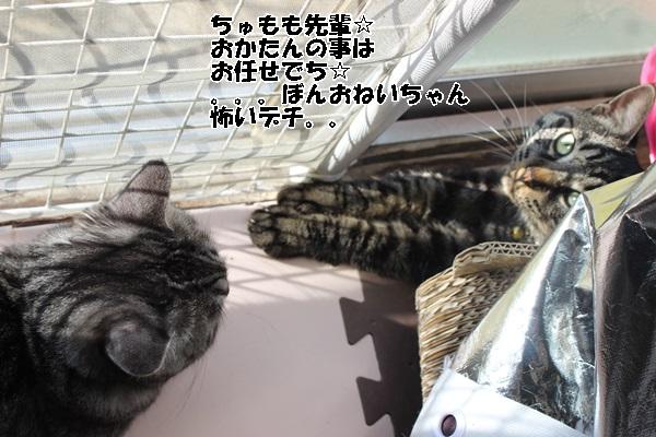 IMG_8436.jpg