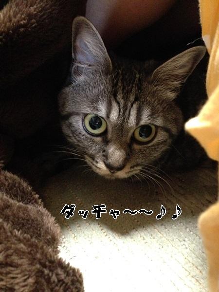 IMG_9485.jpg