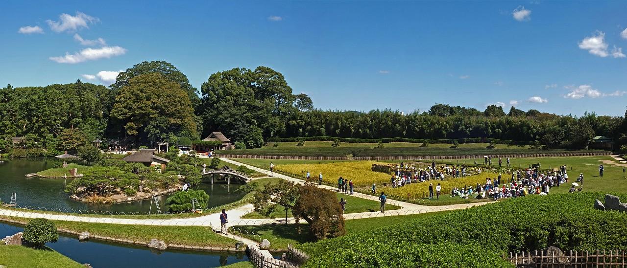 s-20151007 後楽園唯心山から眺めた井田の小学生による稲刈りの様子ワイド風景 (1)