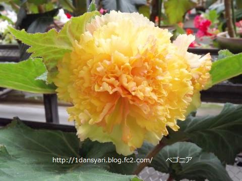 2015_8_28_hana2.png