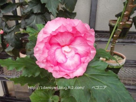 2015_8_29_hana2.png