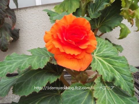 2015_8_31_hana2.png