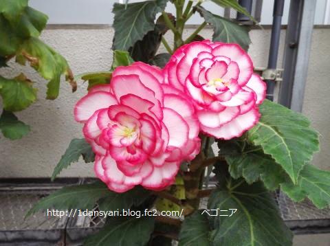 2015_9_07_hana1.png