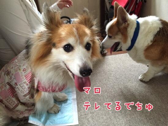 fc2blog_201509042248483e1.jpg