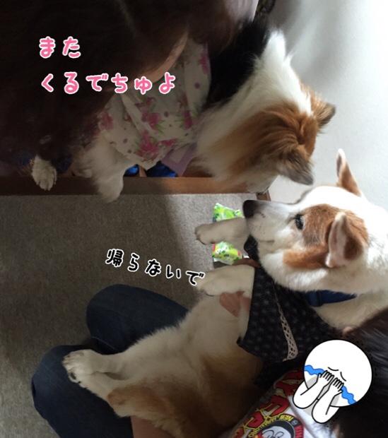 fc2blog_20150906225919d93.jpg