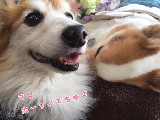 fc2blog_20150922005029e11.jpg