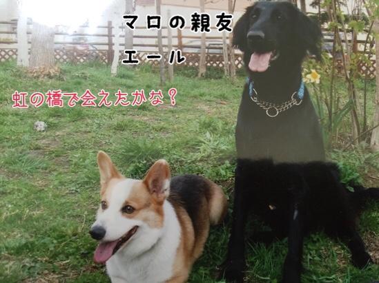 fc2blog_20151006201939e11.jpg
