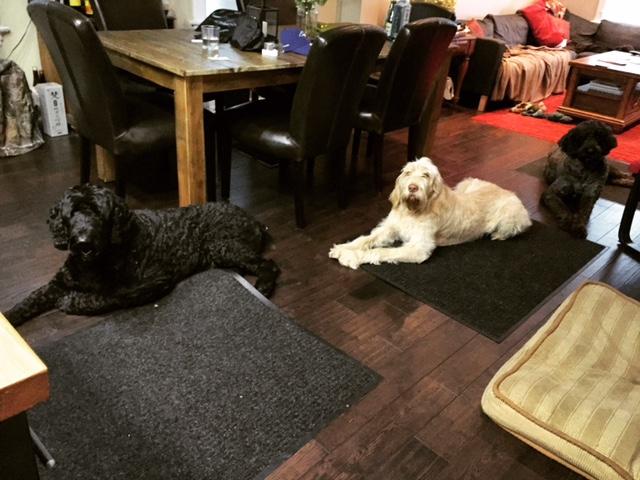 Dogs1-21Sep15.jpg