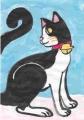 4猫ハチワレ (3)