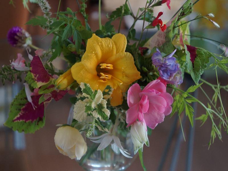 朝採りの庭花