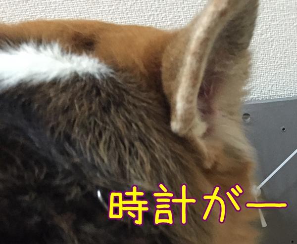 2_20150923150252555.jpg