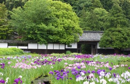 加茂花菖蒲園門と塀
