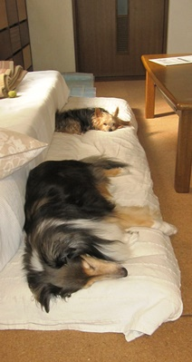 ソファーの下に