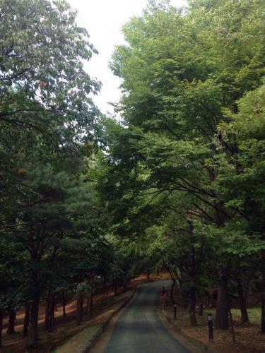 森林浴も出来る延世大学のキャンパスㅎ