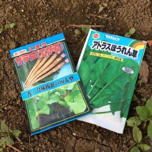 ごぼう・ホウレンソウ種