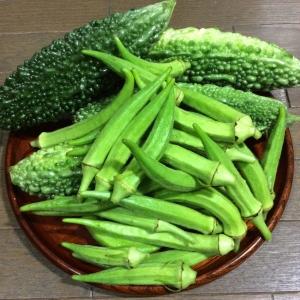 9月8日の収穫物