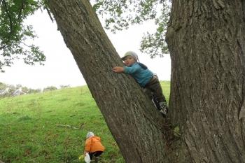 栗の木に登る三男