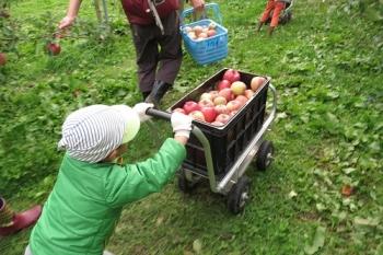 りんご押すきゅう