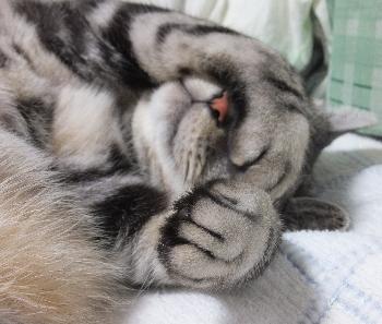 今宵も寝てる3