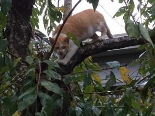 木登りメーヤン
