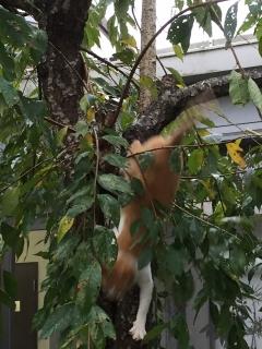 メーヤン木から降りる