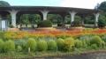 宿根草花壇①