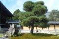 熊谷直実鞍掛の松