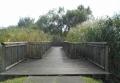 沼地の木道