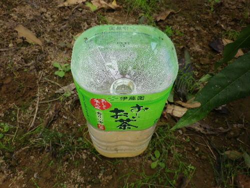 実生桃 2015 10-12-7