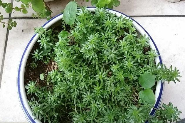 多肉植物①-1