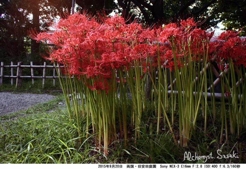 旧安田庭園DSC04109