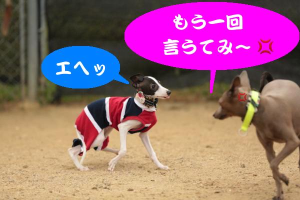 IMG_1443_convert_20151005193138.jpg