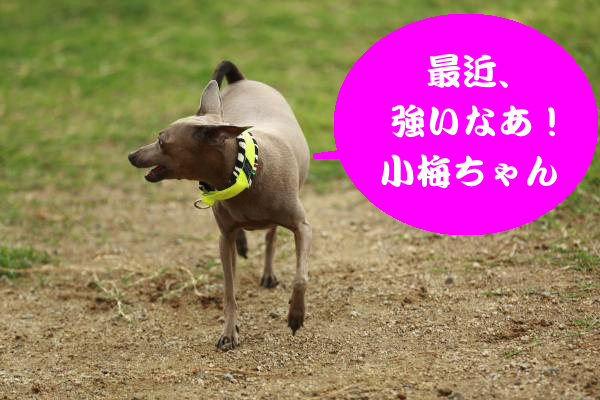 IMG_4570_convert_20150830224134.jpg