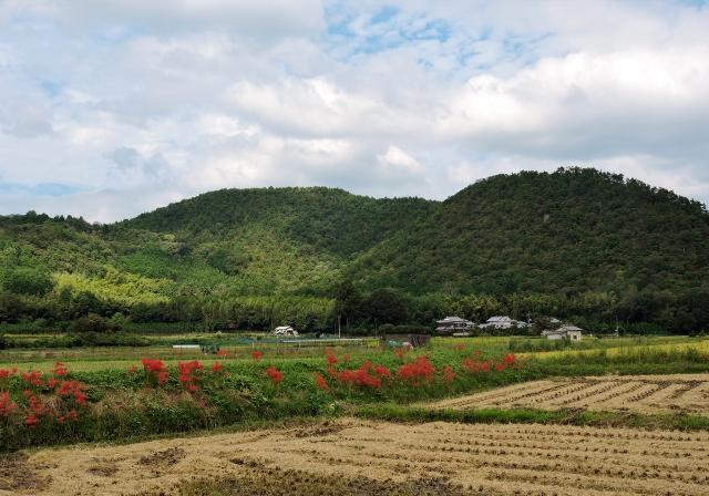 彼岸花2015-09-26 006 (640x448)