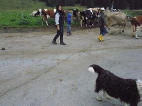 チーズ農家