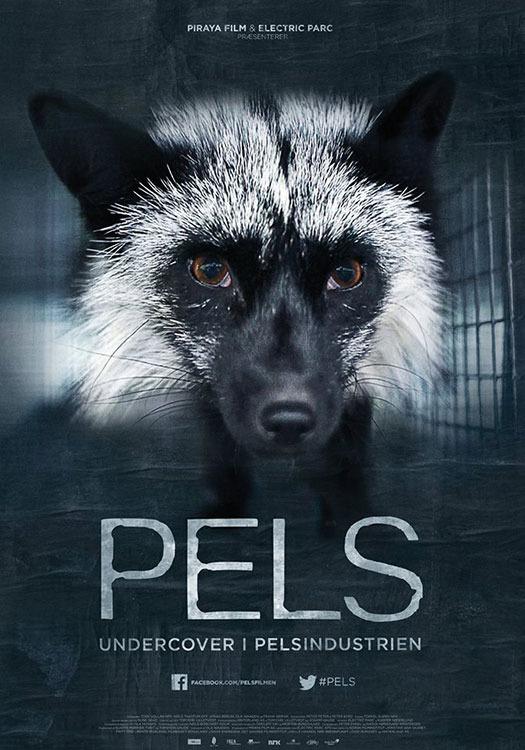 PELS.jpg