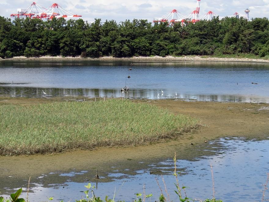 南港野鳥園・秋 (0)