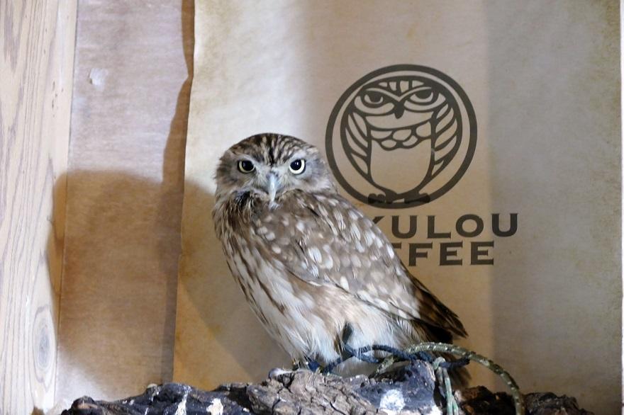 フクロウコーヒー (0)