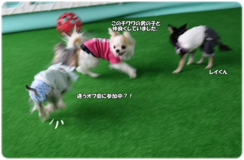DSC_01101013.jpg