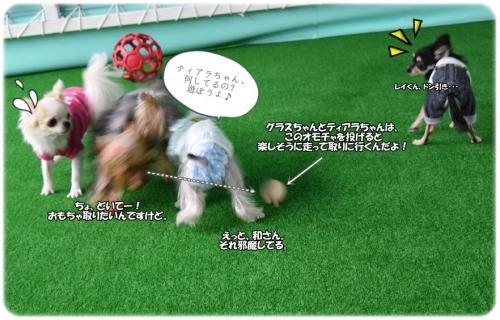 DSC_01111013.jpg