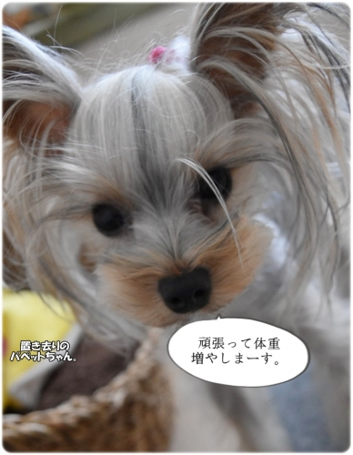 IMG_9155.jpg
