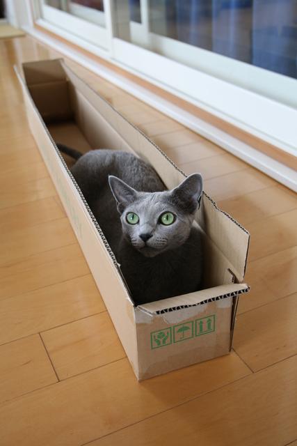 傘の箱 エマ