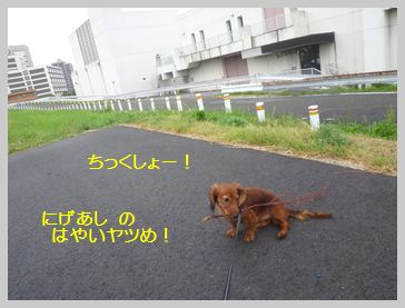 20150813-5.jpg