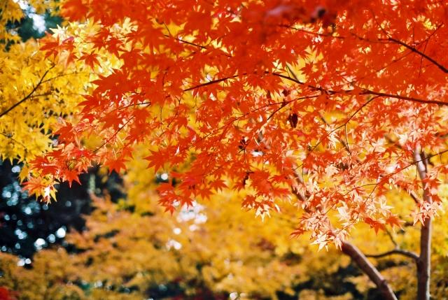 Autumn_20151009152247ecb.jpg