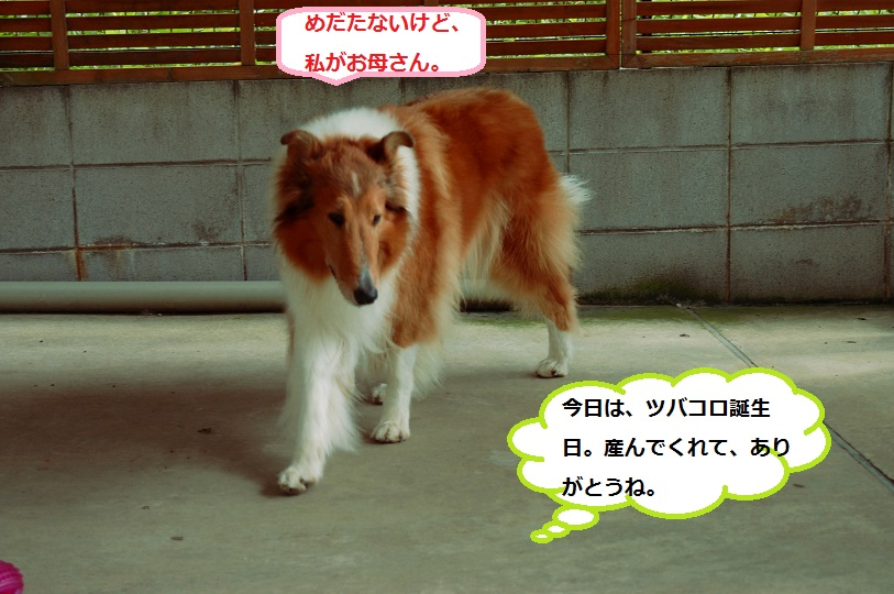 tannzyoubi04.jpg