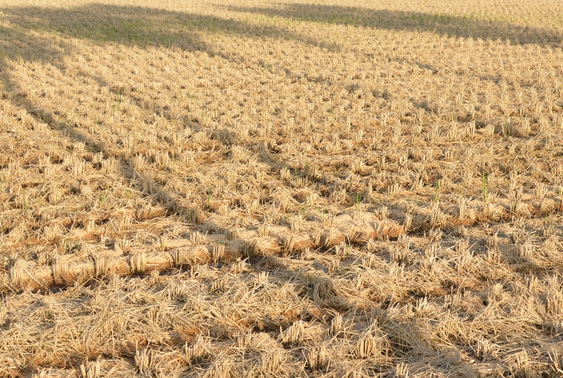 収穫跡-1
